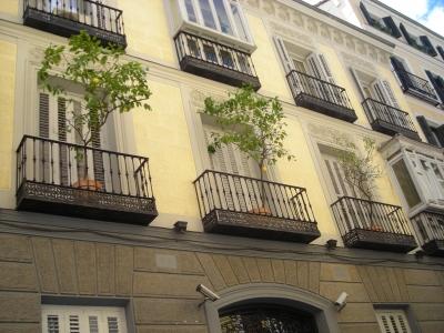 Drei Limonen in drei Balkonen