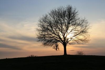 Mein Freund der Baum, am Altmühlsee