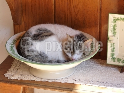 Katze im Porzellanladen