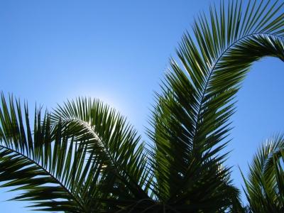 Urlaubseinladung mit Palmen und Himmelsblau