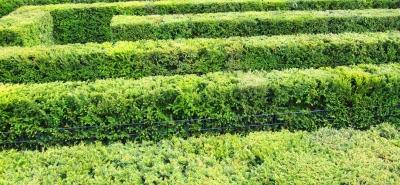 Labyrinth 3/3