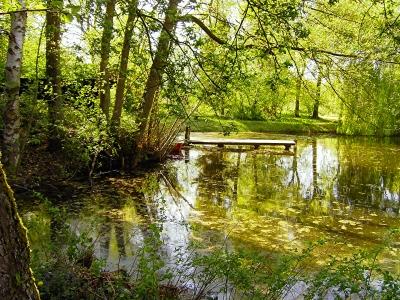 Frühling am kleinen Teich 1