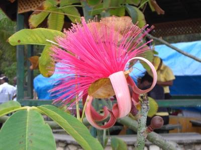 exotische Blütenpracht