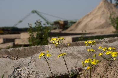 Industrieblumen