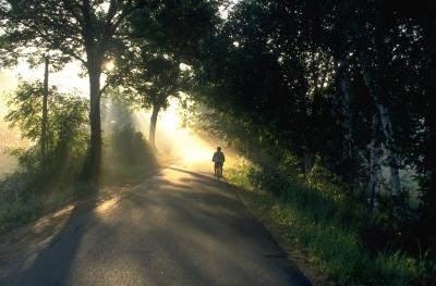 Morgen im Spreewald