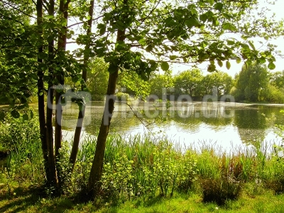 Frühling am Elliesee