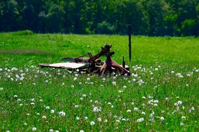 Frühling im Broichbachtal 02