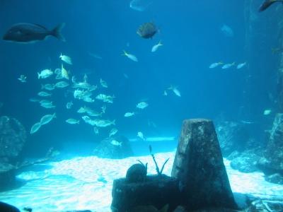 Meeres-Aquarium