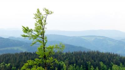 Schwarzwaldhöhen beim Mummelsee