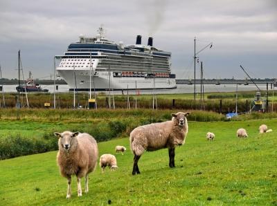 Schiff und Schafe
