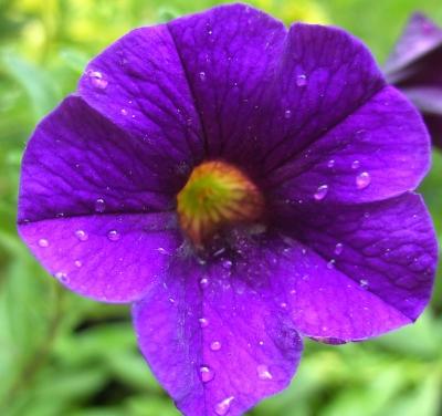 Blüten-Inneres