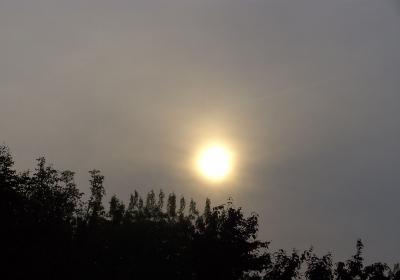 Weißer Sonnenball