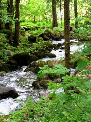 Wildwasser im Wald