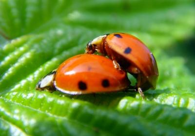 Bin ich ein Käfer-Vojeur?