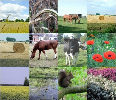 Land und  Tier