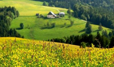 Schwarzwald Wander-Idylle