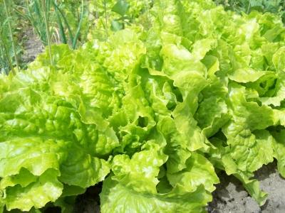 So ein Salat...