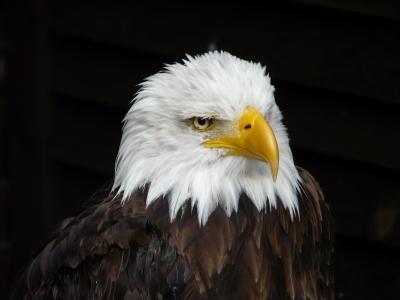Ich bin der Adler der Lüfte
