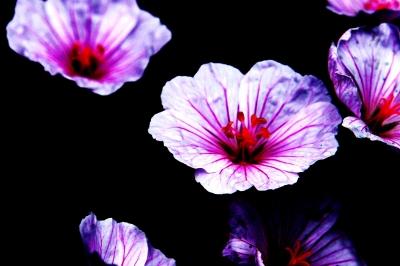 Kunterbunte Blumenkunst