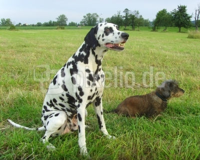 Hundefreundschaft