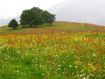 Schwarzwald mit Toscana-Look