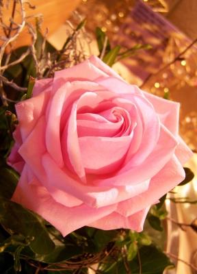 Geburtstags - Rose: ein Traum in Rosa