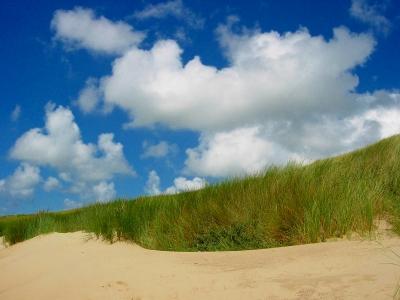 Dünen auf Norderney