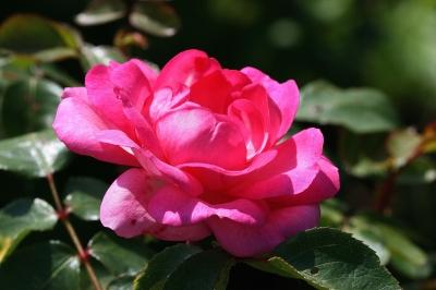 Blüten 282