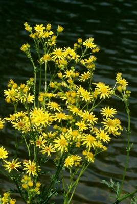 Gelber Tupfer am Seeufer