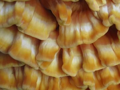 Rätsel: Pilz auf Baumstumpf - Gelöst von bjoerni