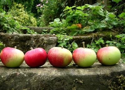 Apfeltreppe . . .