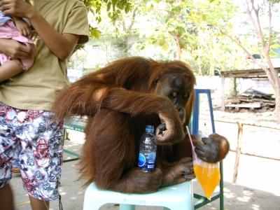Ist das wirklich nur ein Affe?