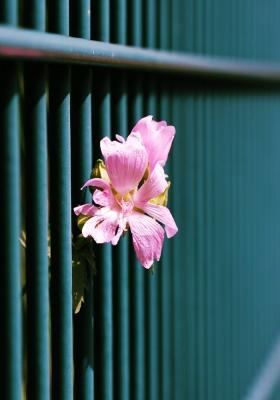 Pflanze hinter Gittern