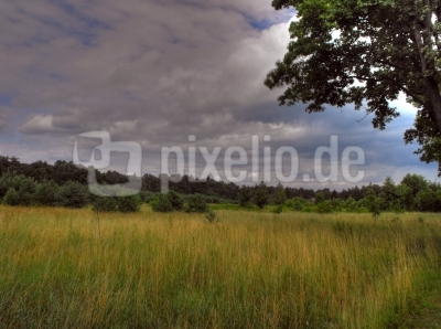 HDR - Naturwiese