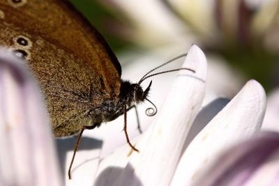 Schmetterling 13