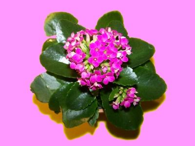 Kleiner Blumengruß_3