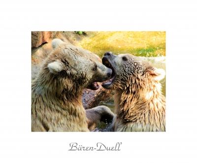 Bären-Duell