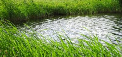 Wasser und Grün - Natur pur
