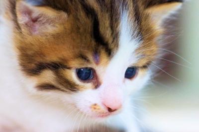 Katze3