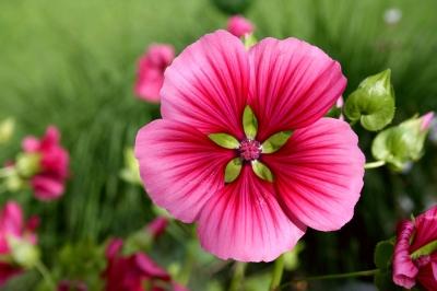 Blüten 302