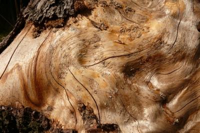 Spuren im Holz