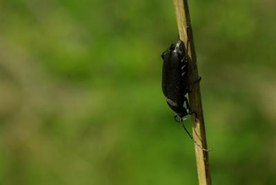 Käfer 2 - rauf und runter