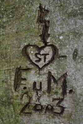 Ewige Liebe in die Rinde geschnitzt...