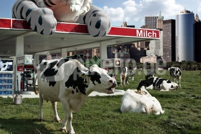 Milchpreise ??