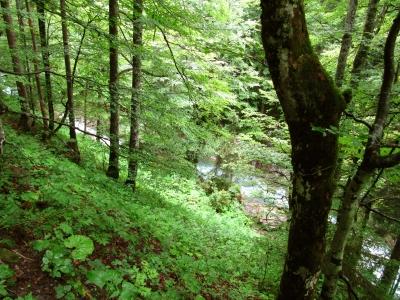 Bergwald über dem Bergbach