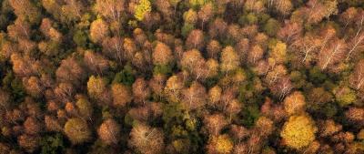 Herbstwald bunt - Luftbild