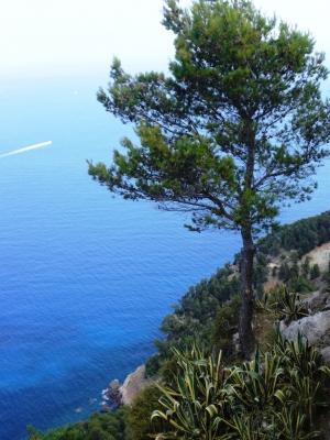 Einsame Pinie an einer Felsenklippe