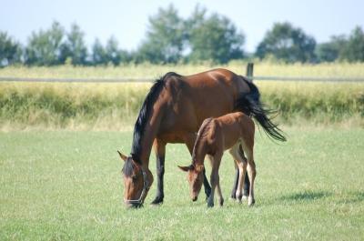 Mutter mit ihrem Fohlen