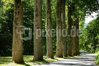 Pappelallee_2