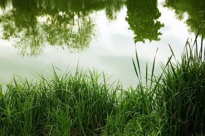 Wasser und Grün - Natur pur_2